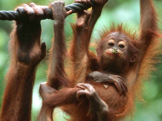 Things to do in Malaysian Borneo